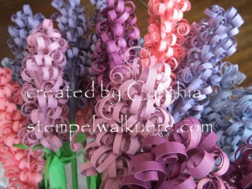Hyacinth Stempelwalküre 1c